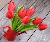Spring Tulips — Foto Stock