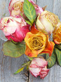 Withered Roses — Stockfoto