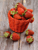 森林草莓 — 图库照片
