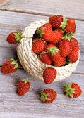 Forest Strawberries — Stockfoto