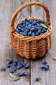Honeysuckle Berries — Stock Photo