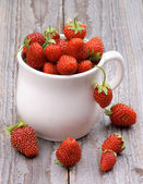 Forest Strawberries — Stockfoto
