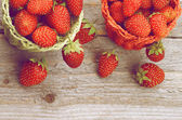 Skogen jordgubbar — Stockfoto