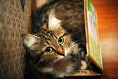Cat in a box — Stock Photo