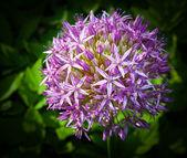 夏の花 — ストック写真