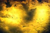 Косяк птицы — Стоковое фото