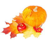 Pumpkin and maple leaves — Stock Photo