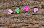 Colored hearts on the bark of pine — Stock Photo