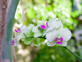 Twig of blooming orchids — Stock Photo