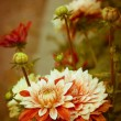 Stock Photo: Beautiful dahlias