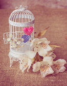 White cage with freesias and valentines — Stock Photo
