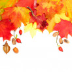 Autumn design background — Stock Photo #13410694