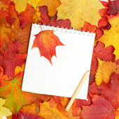 Back to School - Autumn leaves and white blank paper — Stock Photo