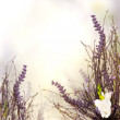 Floral border blurred background — Stock Photo #35672601