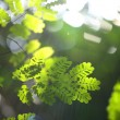 Background with greenery foliage — ストック写真