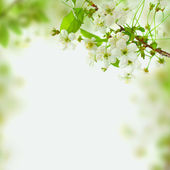 Spring blossom background - — Stock Photo
