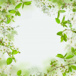 Spring nature background, frame of flowers and green leaves — Stock Photo