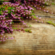 Beautiful flowers on wooden background — Stock Photo