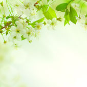 Spring blossom background — Stock Photo