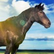 Horse in a sunny field - Stock Photo