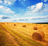 Cloudy wheat field — Stock Photo