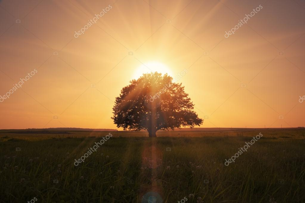 Фотообои Волшебный Восход с дерева
