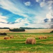 Cloudy wheat field — Stock Photo