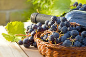 Grapes and wine bottles — Stock Photo