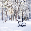 Beautiful details of winter park — Stock Photo