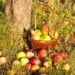 Stok fotoğraf: Basket with apples