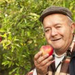 Older man in the orchard — Stock Photo #33920393