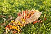 Straw hat — Foto Stock