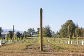 Early Canadian Vineyard — Stock Photo