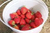 Bucket of Strawberries — Stock Photo