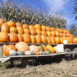 Royalty-Free Stock Photo: A Variety of Pumpkins