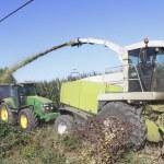 Harvesting Corn — Stock Photo