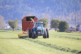 Harvesting Grass for Winter Feed — Stock Photo