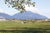 Pasture Land in Mountain Area — Stock Photo