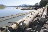 川側ログ ブーム — ストック写真
