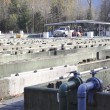 Stock Photo: Fish Hatchery
