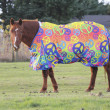 Stock Photo: Wrap or Comforter for Horse