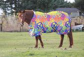 Envoltório ou consolador para cavalo — Fotografia Stock