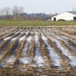 Winter Cornfield — Stock Photo
