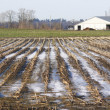 Winter Cornfield — Stock Photo #18410337