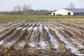 Campo di grano invernale — Foto Stock