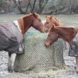 Horses Share Bundled Hay Bale — Stock Photo