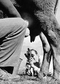 Um operador de câmera de cinema na década de 1950 — Fotografia Stock