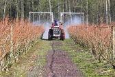 Farmer Sprays Chemicals on Blueberry Crop — Stock Photo