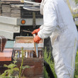 Removing Beehive Box Plate — Stockfoto
