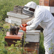 Beekeeper with Fogger or Smoker — Stock Photo #26167843